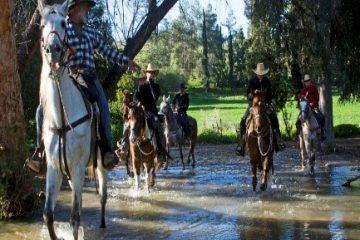 יום כיף וגיבוש בחוות סוסים